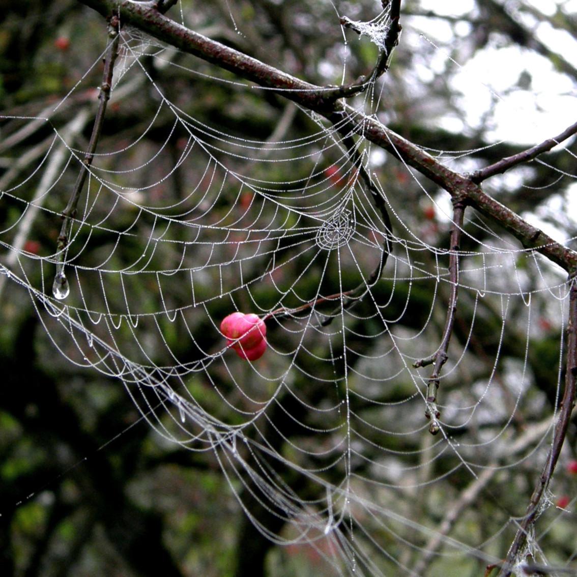 Wald im Netz
